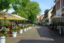 Lions Marktheidenfeld_26.jpg - Stadtrundgang in Marktheidenfeld
