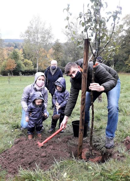 Pflanzung neuer Bäume