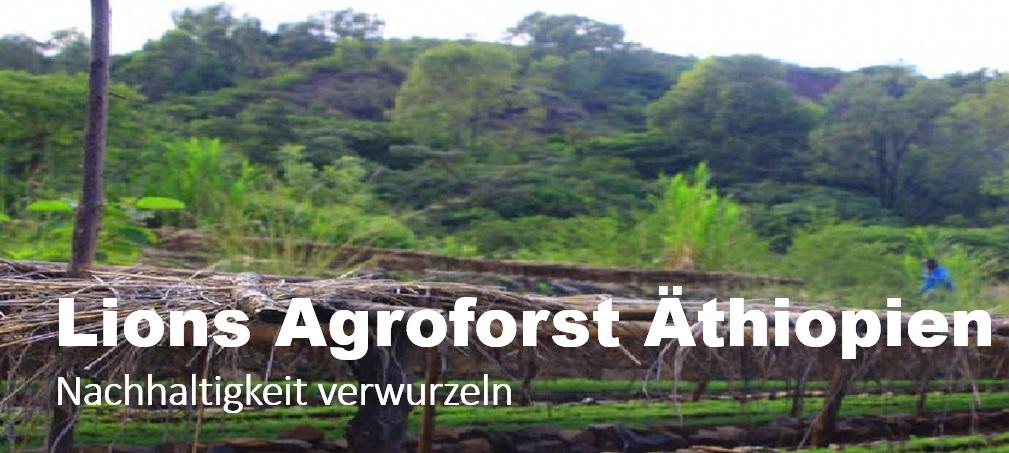 Hintergrundbild Header Agroforst Äthiopien