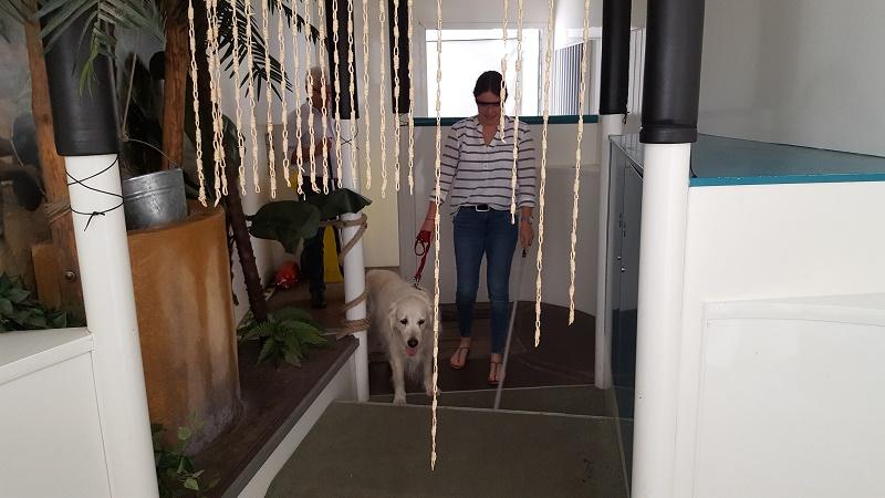 Blinde mit Hund